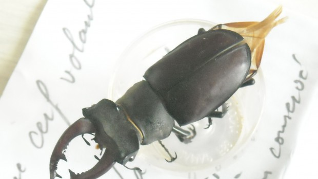 photos de la faune : larve