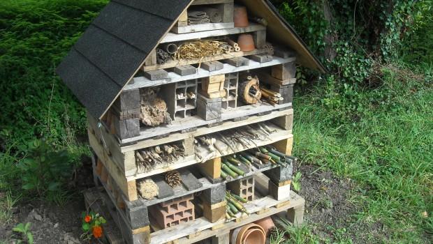 photos de la faune : ruche